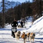 Chien de traineaux Vars Hautes Alpes Eyssina Mush and co hiver randonnées Alpes