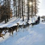 Chien de traineaux Vars Hautes Alpes Mush and co hiver randonnées Alpes