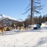 Chien de traineaux Vars Hautes Alpes Mush and co hiver randonnées ballades Alpes