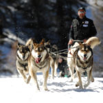 Chien de traineaux Vars Mush and co husky hiver randonnées Alpes