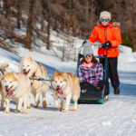 Famille vars mush and co sleigh dogs husky