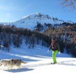 cani raquette ballade vars chiens de traineaux hiver