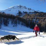 cani raquette husky ballade vars chiens de traineaux hiver