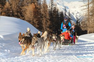 Famille vars mush and co sleigh dogs husky-2