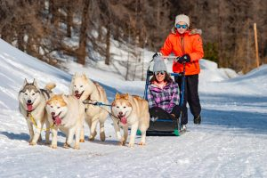 Famille vars mush and co sleigh dogs husky