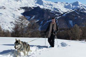 cani raquette husky randonnées ballade vars chiens de traineaux hiver
