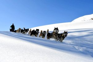 sleigh dogs Vars south Alps Mush and co hiver freeride ballades Alpes